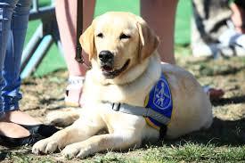 Association des Chiens Guides d'aveugles